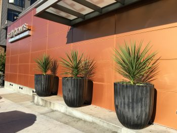 Scotty Browns Parking Lot Planters